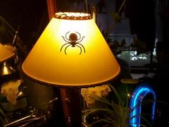 蜘蛛 復活!_e0065433_2341853.jpg