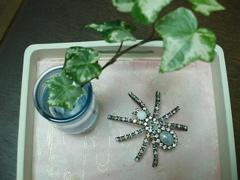 蜘蛛 復活!_e0065433_23424849.jpg