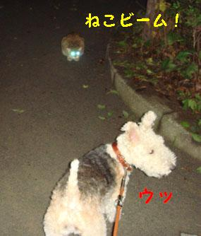 b0091373_372028.jpg