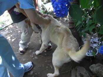 きょうは、狂犬病予防注射の日。_b0038381_2341346.jpg