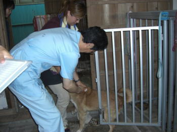 きょうは、狂犬病予防注射の日。_b0038381_2341766.jpg