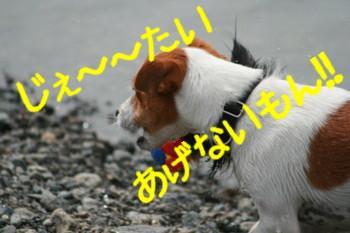 f0055395_0202062.jpg