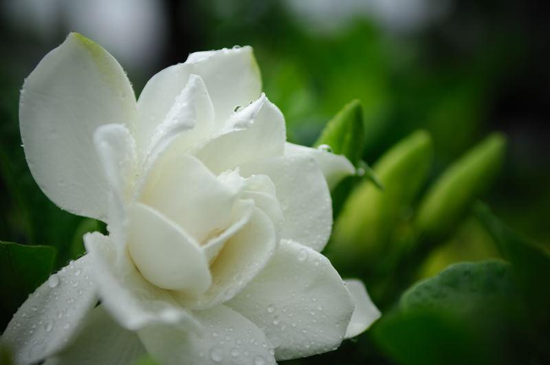 雨の日・甘い香りに誘われて♪_f0032011_20301196.jpg