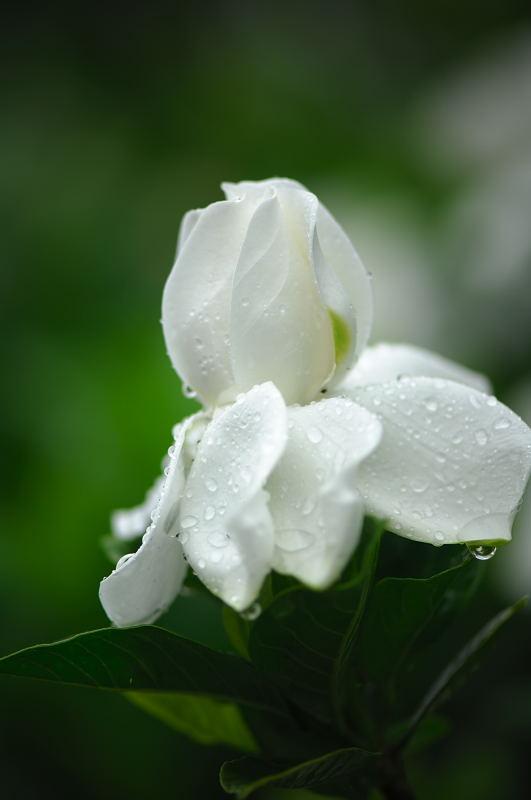 雨の日・甘い香りに誘われて♪_f0032011_20304629.jpg