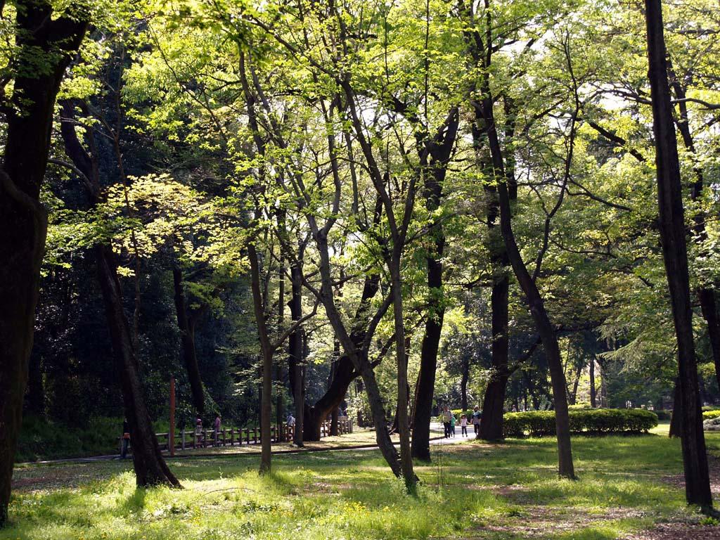 新緑の嬉しい季節になりました。 群馬の森にて_e0127034_1039829.jpg