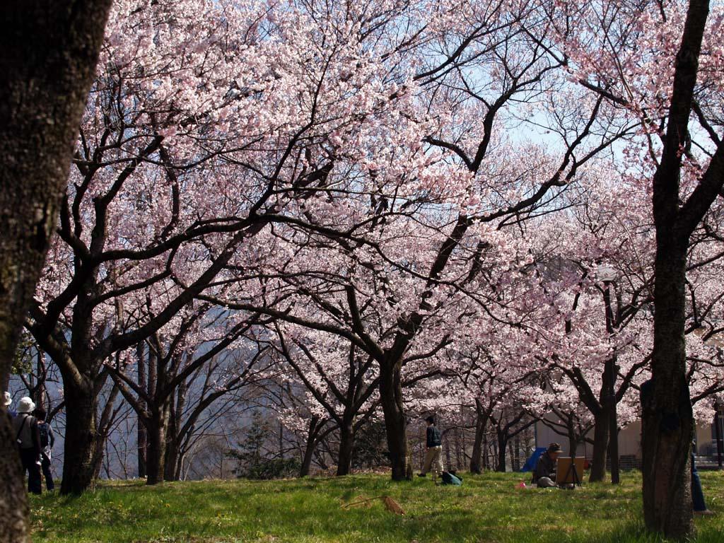 高遠城址公園の桜 「長野県伊那市高遠町」_e0127034_10481735.jpg
