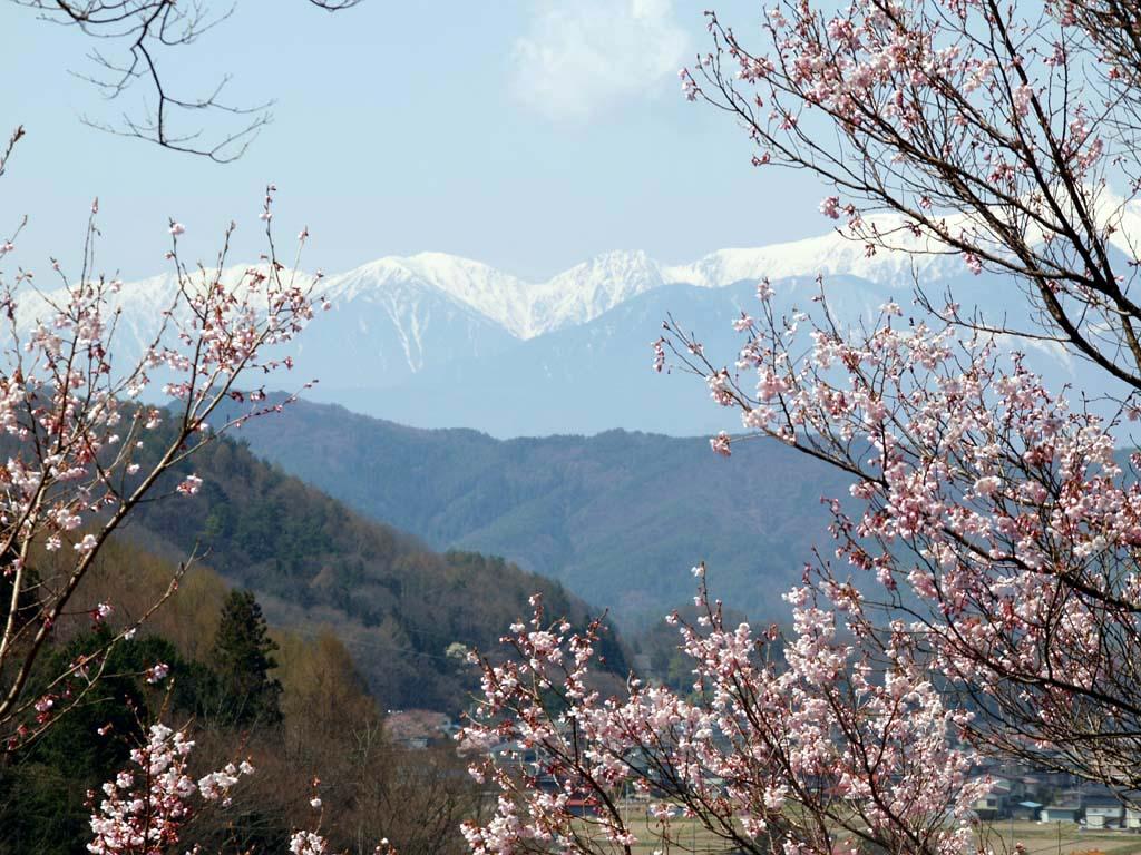 高遠城址公園の桜 「長野県伊那市高遠町」_e0127034_10513160.jpg