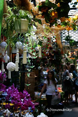 シテ島のミニ植物園_c0024345_1710612.jpg