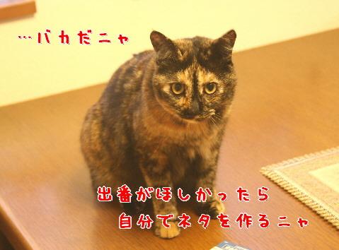 d0013149_141376.jpg