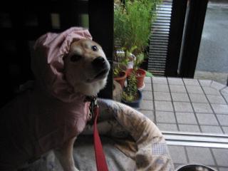 昨日は晴れ! きょうは雨。。。_c0049950_22535529.jpg