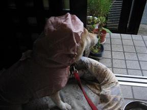 昨日は晴れ! きょうは雨。。。_c0049950_2382941.jpg