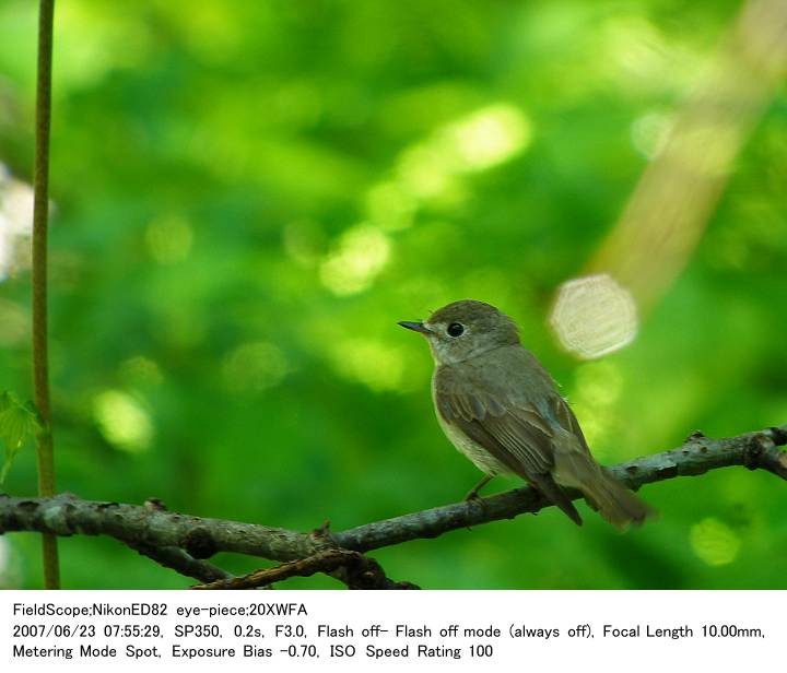 2007.6.23(1) 戸隠森林植物園_c0062451_17143637.jpg