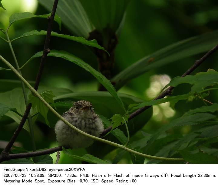 2007.6.23(1) 戸隠森林植物園_c0062451_17185888.jpg