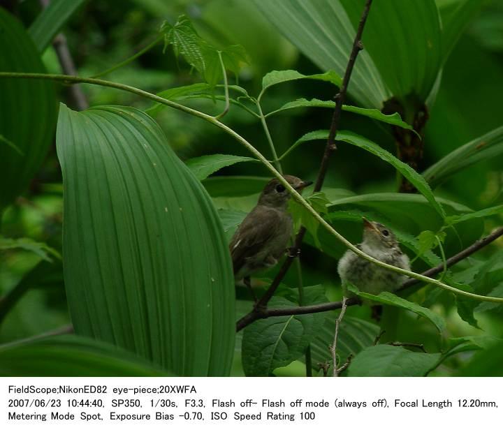 2007.6.23(1) 戸隠森林植物園_c0062451_17195775.jpg