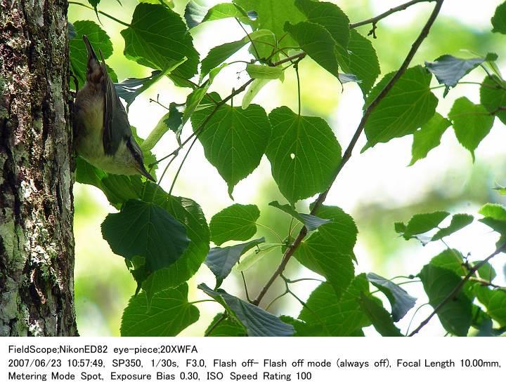 2007.6.23(1) 戸隠森林植物園_c0062451_17214876.jpg