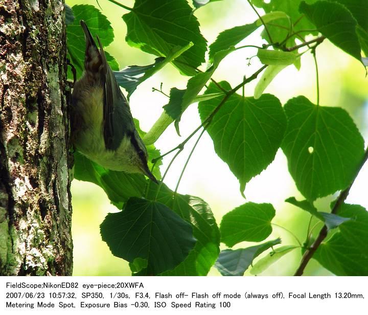 2007.6.23(1) 戸隠森林植物園_c0062451_17221443.jpg