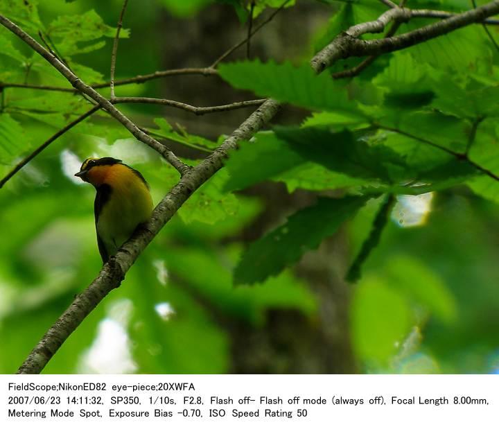 2007.6.23(2) 戸隠森林植物園_c0062451_17375217.jpg