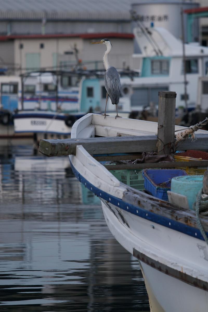 漁港 3_f0021869_22343614.jpg