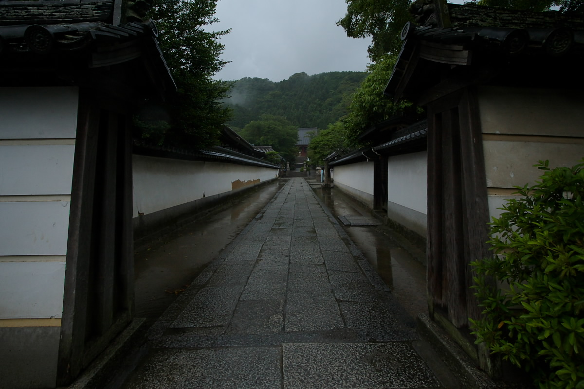 奈良 矢田寺 <紫陽花> 雨_f0021869_32538.jpg