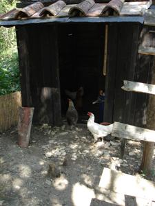 母鶏の気持ち_f0106597_20344037.jpg