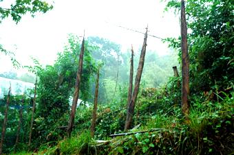 雨後のタケノコ_a0102098_2310478.jpg