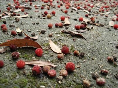 梅雨の中休みですね。_e0110719_21572518.jpg