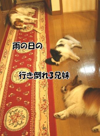 d0013149_1393441.jpg