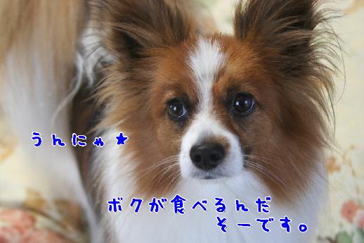 d0013149_1563531.jpg