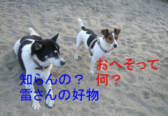f0053952_1022150.jpg