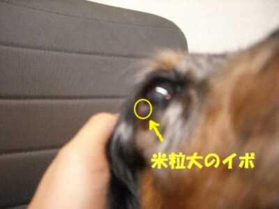 d0020869_1571077.jpg