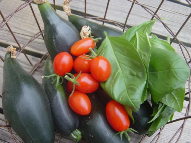 夏野菜収穫!_f0073070_10571356.jpg