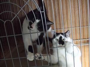 猫のお世話スタッフ(住み込み)募集!_b0038381_2327557.jpg
