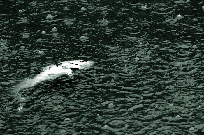 雨の日街角・其の二 東寺_f0032011_19565212.jpg
