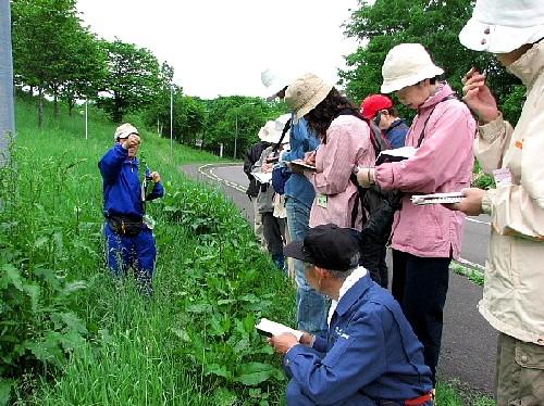 6月26日(火):曇りなれどセミ大合唱_e0062415_1747571.jpg