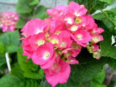 雨に咲く花_d0066822_659429.jpg