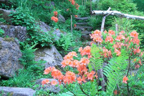 ピラタスの丘の花_d0102327_22575279.jpg