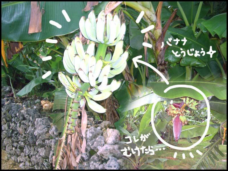 f0119369_20113964.jpg