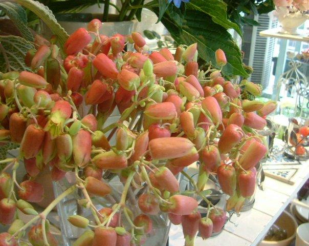 オークリーフ(個性派の花たち)_f0049672_14324949.jpg