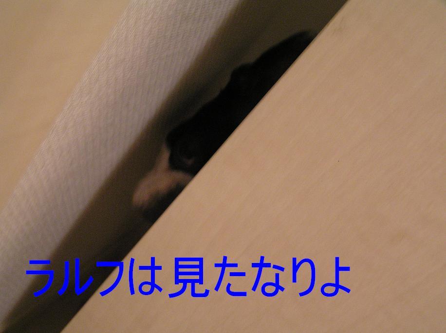 c0106039_22425828.jpg
