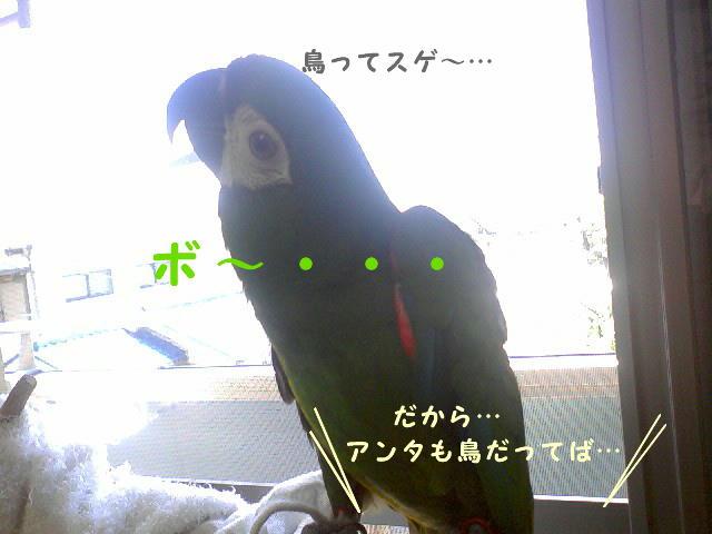 f0132055_952241.jpg