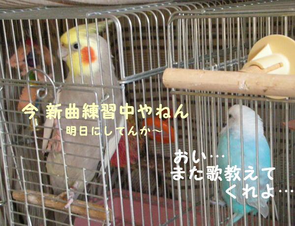 f0132055_9573229.jpg