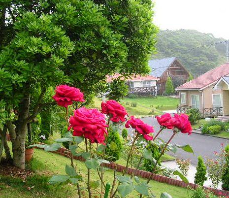 2007年6月27日(水)庭の手入れと薔薇_f0060461_1520935.jpg