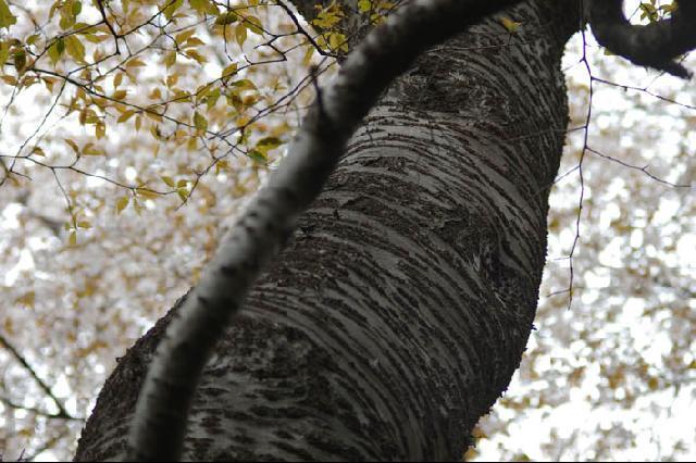 北鎌倉湧水ネットワークが「第1回ぶらっと賞」に入賞!_c0014967_10183976.jpg