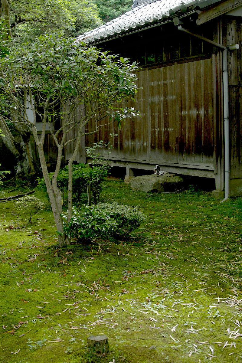京都 西山 <楊谷寺> 2_f0021869_2252896.jpg
