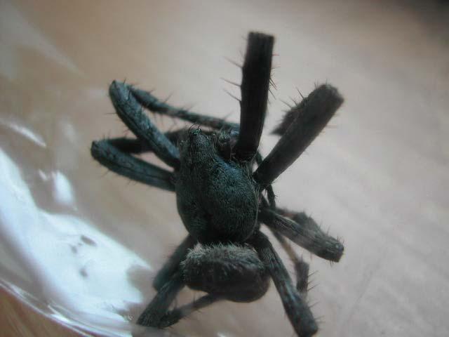 なんだかとても不気味な蜘蛛が現れたんです!_b0025008_21495018.jpg