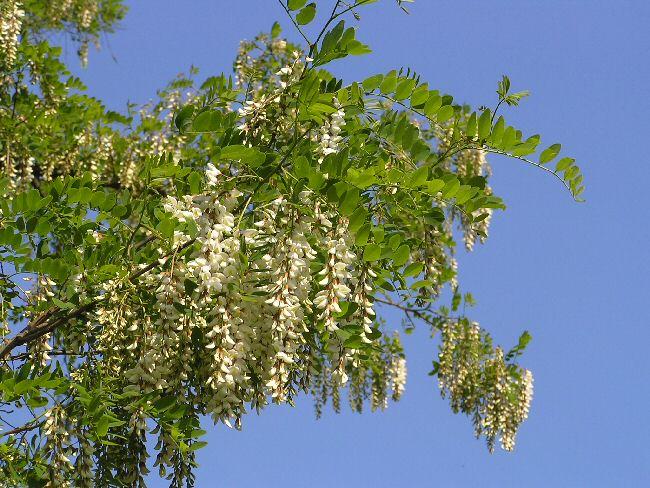 白馬の花   4  _a0027125_625857.jpg