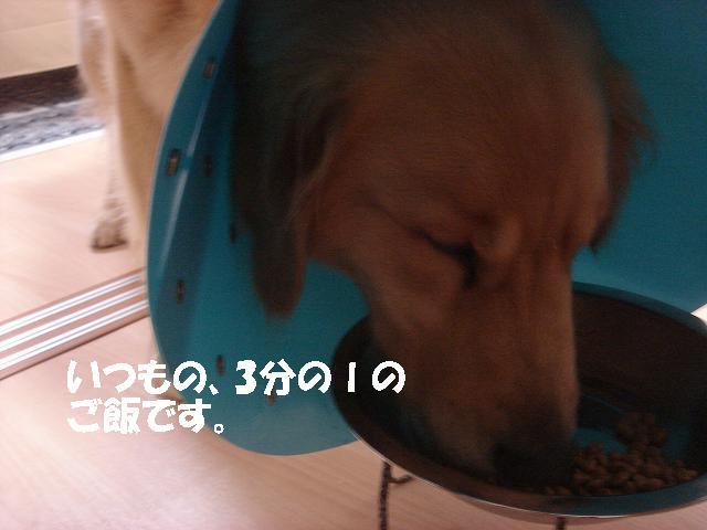 f0114128_9464489.jpg