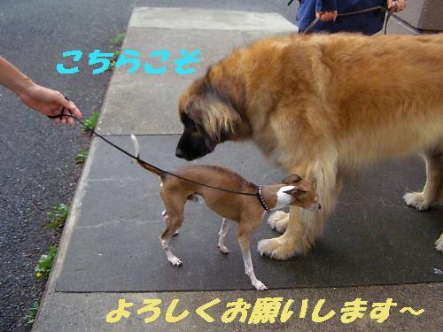 a0092032_055934.jpg