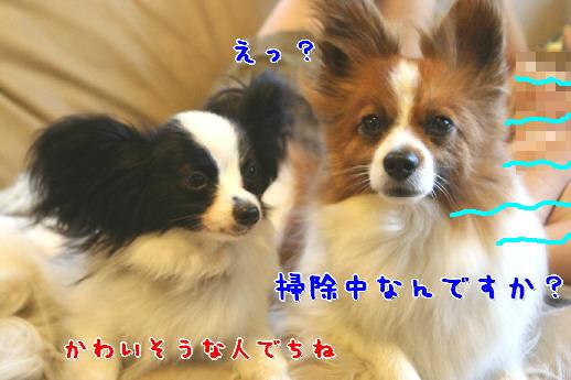 d0013149_0515491.jpg