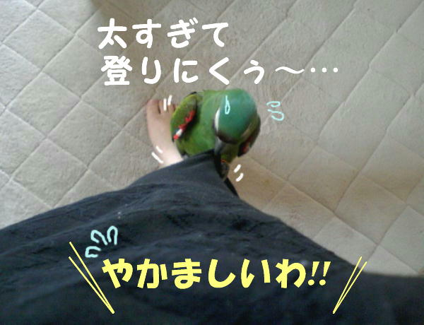 f0132055_10222462.jpg